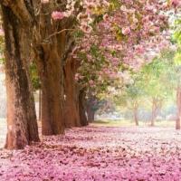 Charla gratuita: El Tarot como camino de vida
